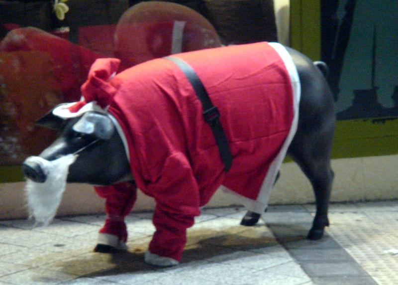 Cerdo vestido de papá Nöel
